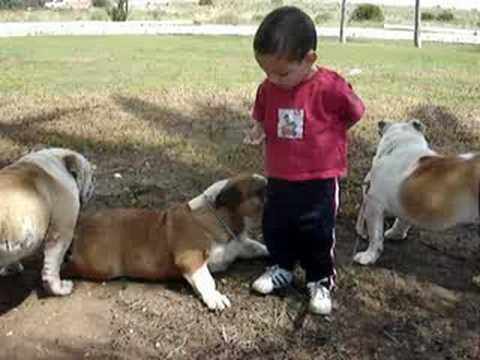 Hugo y sus perros