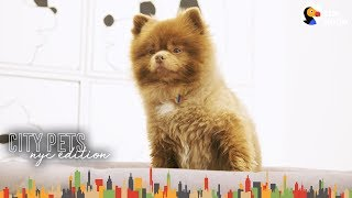 Little Dog Loves Hanging Out At Mom's Art Gallery | The Dodo City Pets by The Dodo
