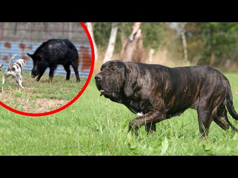These Are Top 10 Hound Dog Breeds