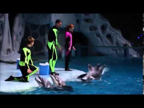 Москвариум. Дельфины (видео)