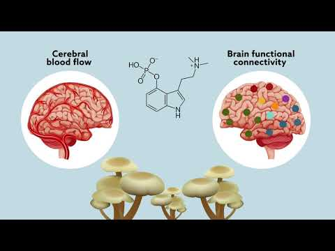 Psilocybin may 'reset' the brain to help manage treatment-resistant depression