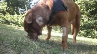 Carrieres-sur-Seine France  city photos : Des nouvelles du chien rescapé de Carrières-sur-Seine,