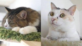 ここが猫ちゃんたちの楽園、展望まったりスポットでお昼寝をする猫ちゃんたち