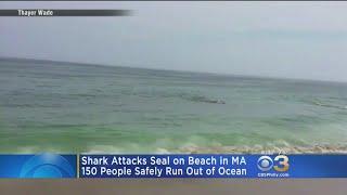 Video Shark Attacks Seal On Beach In Massachusetts MP3, 3GP, MP4, WEBM, AVI, FLV Agustus 2017