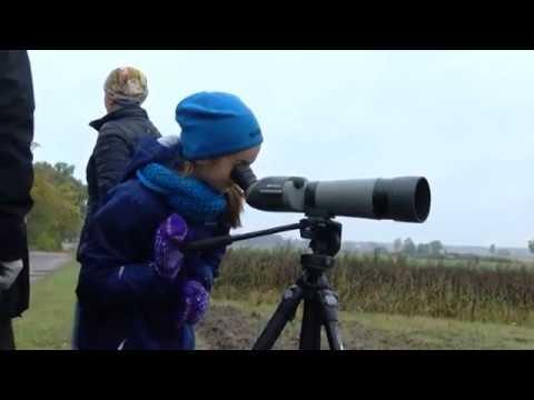 Putnu vērošanas iespējas ap Burtnieka ezeru