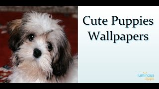 Cute Puppies Wallpapers YouTube video