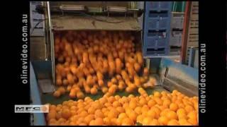 Mildura Australia  City pictures : Mildura Fruit Compnay presentation video