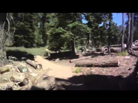 Mountin Goats in Big Bear 2013