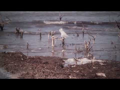 BP oil disaster - On the three year memorial of the BP Oil Spill disaster I wanted to share with you one very important fact. BP has been lying to you! Due to decades of abuse...