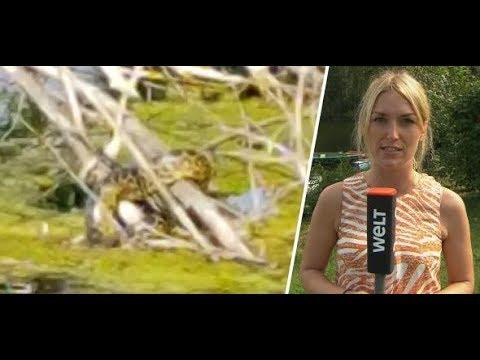 Anakonda bei Meerbusch gesichtet: Latumer See am Niederrhein gesperrt