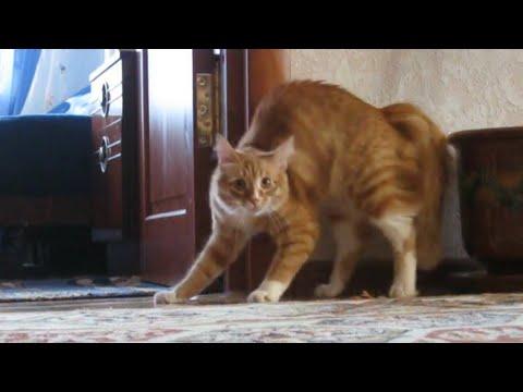 Adrenaline Cats | Funny Cat Video Compilation 2017 (видео)