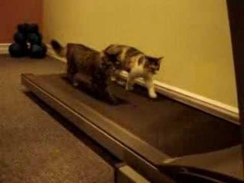Funny Cats – You'll laugh