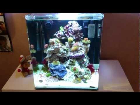 Nano aquarium reeftank how to set up a saltwater aquarium