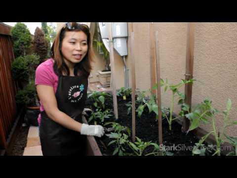 planting - http://www.starkinsider.com/gardening Vegetable gardening fans, time to plant! Loni shares some tips & tricks to getting the most out of an urban vegetable g...