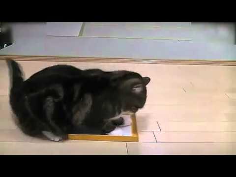 主人把貓睡覺的箱子偷偷換掉之後... 笑死我了!!