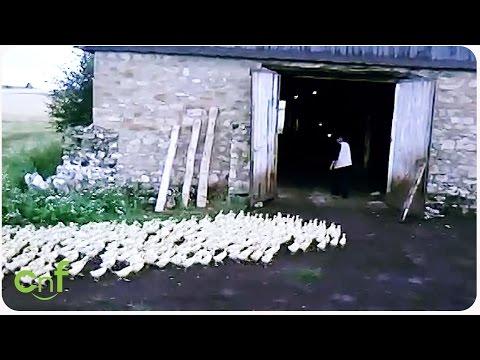 Este granjero manda a unos patos como si fuera un sargento