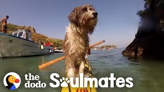 Guy Kayaking Across The Ocean Meets A Stray Dog | The Dodo Soulmates by The Dodo