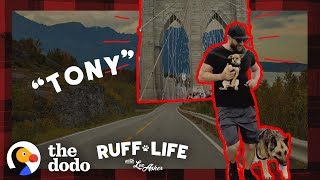 148-Pound German Shepherd Loses Over 40 Pounds | Ruff Life With Lee Asher by The Dodo