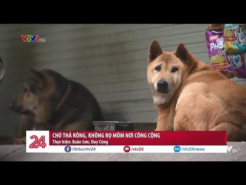 Hãi hùng chó thả rông, không rọ mõm nơi công cộng @ vcloz.com