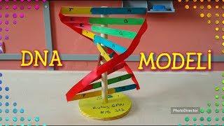 Kızartma çubuğu ve kurdele ayak kullanarak DNA modeli yapımı