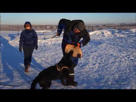 Zilber Vasserfal Yulaiss 1 year 11 months Тренинг   семинар по защите с Алексеем Соколовым