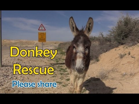 donkey - I just want to share a few important links: Eldad's Facebook page: http://www.facebook.com/eldad75 Hope For Paws' Facebook page: https://www.facebook.com/hop...