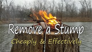 Video How to Remove a Stump, Cheaply & Effectively! MP3, 3GP, MP4, WEBM, AVI, FLV Juli 2019