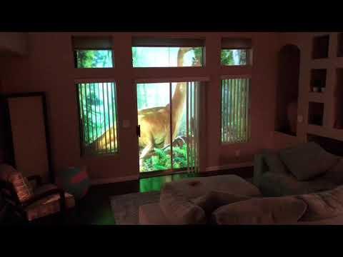 Mies laittoi videotykin heijastaan olohuoneen ikkunaan – Huikee näky