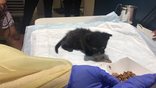 LIVE: Adoptable kittens handfed at ASPCA | The Dodo LIVE by The Dodo