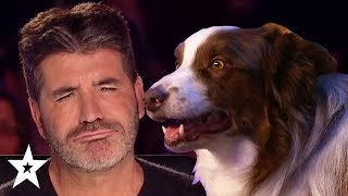 Video Simon Cowell's FAVOURITE Dog Auditions On Got Talent! | Got Talent Global MP3, 3GP, MP4, WEBM, AVI, FLV Agustus 2019