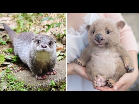 Cute Baby Animals Videos Compilation 2019 - Cute Moment of the Animals - Funny Animals Videos #2