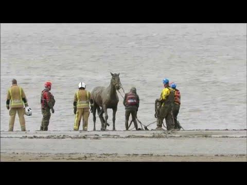 Επιχείρηση διάσωσης αλόγου από την λάσπη