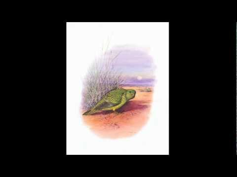 Glimpses And Specimens From The Land Of The Night Parrot trailer