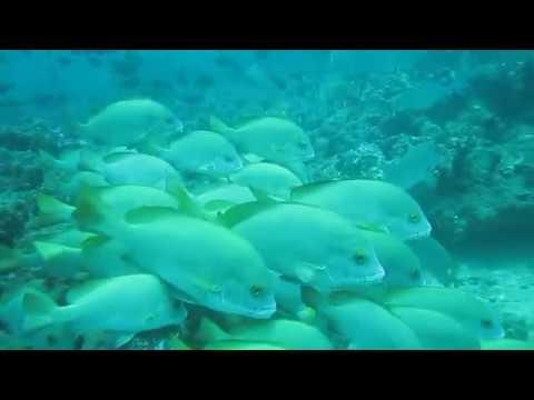 Negombo - a scuba diving paradise in Sri Lanka!