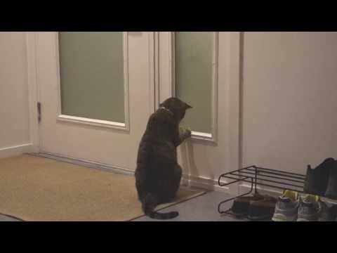 The Adventures of Oskar the Blind Cat and Klaus - Episode 6 - Parkour Pussycat_Legjobb vide�k: Extr�m