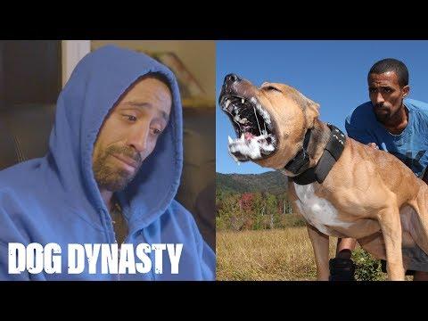 RIP Ace: Super Pitbull Killed In Horror Attack | DOG DYNASTY