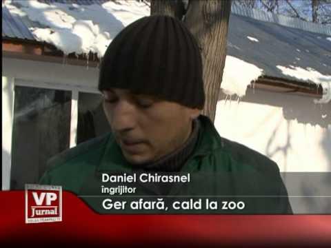 Ger afară, cald la zoo