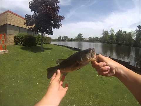 Bass & Crappie Fishing a Pond with Jerkbaits