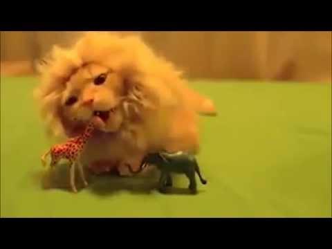 gatto con la parrucca diventa un leone