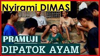 Video Ayam, Nanas dan Nyirami Dimas (Hajar Pamuji) MP3, 3GP, MP4, WEBM, AVI, FLV Februari 2019