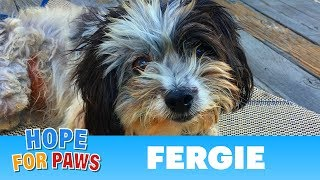 Surrounded by predators, Fergie survived alone in the mountains! by Hope For Paws