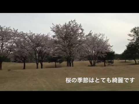 部門賞桜の咲く季節は最高です。イメージ