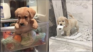 Video Cute baby animals Videos Compilation cute moment of the animals - Cutest Animals #2 MP3, 3GP, MP4, WEBM, AVI, FLV Maret 2019