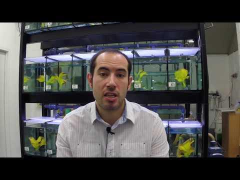 The Zebrafish Lab