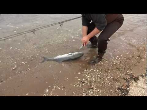 Surf Fishing Big Bluefish with Slap Jackson – Oct 2012
