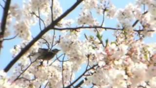 春風-HARUKAZE 予告編