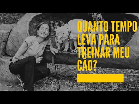 Video Quanto tempo leva para treinar meu cão? download in MP3, 3GP, MP4, WEBM, AVI, FLV January 2017