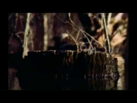 The Legend Of Boggy Creek (1972) - Trailer