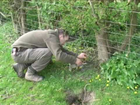 Rabbit Snaring Part 1