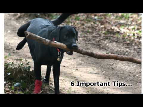6 Important Dog Training Tips For Obedience Training